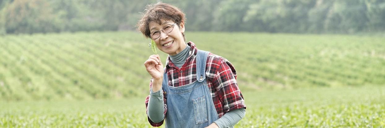Morimoto Shincha Tee 2019